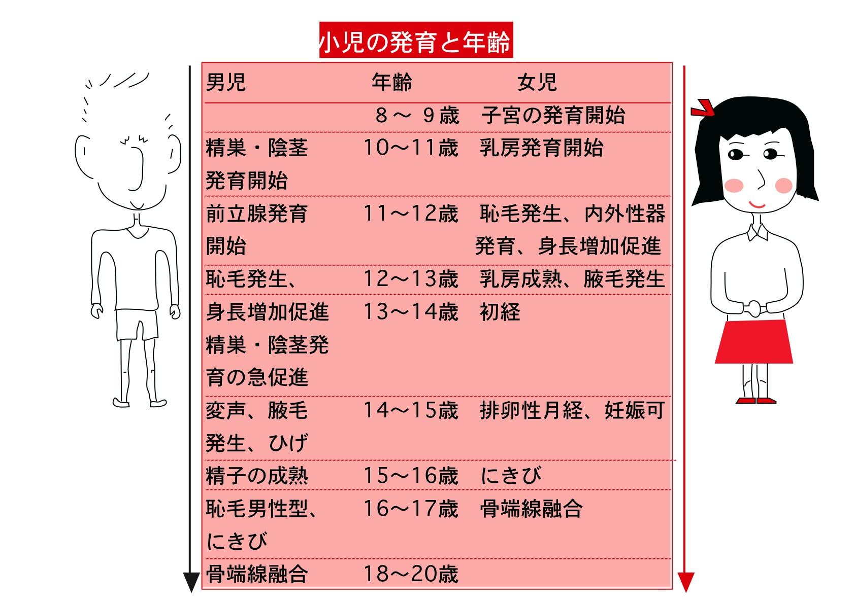 乳房の発達段階 小児の発育.png